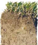 Soil Testing: soil conditioning services